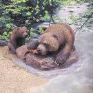 Bear with Cubs & Fish