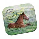 Young Horse Mouse Pad