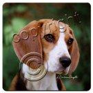 BAC14 Beagle Coasters