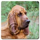 BAC69 Bloodhound Coasters