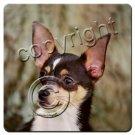 BAC06A Chihuahua, Black & White Coasters