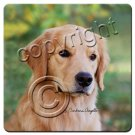 BAC09 Golden Retriever  Coasters
