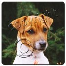 BAC105A Jack Russell Terrier, Brown & White, Smooth Coat Coasters