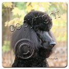 BAC104D Poodle, Black, Sport cut Coasters