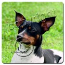 BAC109 Rat Terrier  Coasters