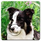 BAC62 Border Collie Coasters