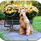 BAMP38 Airedale Mouse Pad
