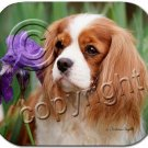 BAMP80A Cavalier King Charles, Brown & White Mouse Pad
