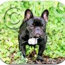 BAMP73 French Bulldog Mouse Pad