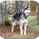 BAMP17D Husky, Gray & White, Brown Eyes Mouse Pad