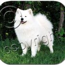 BAMP39 Samoyed  Mouse Pad