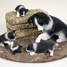 DCL62 Border Collie Mom & Pups