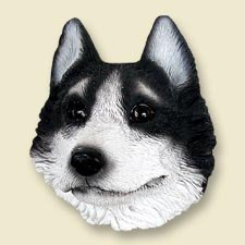 DM17B Husky, Black & White, Brown Eyes Magnet