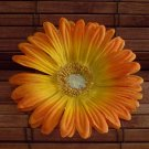 Orange Gerbera Daisy Hair Elastic