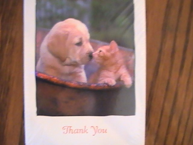American Greetings Puppy & Kitty Thank You Cards