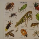 "American Greetings ""INSECTS"" Scrapbook Craft Stickers"