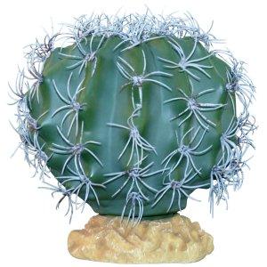 "Desert Series Terrarium Plants Melon Cactus 9"""