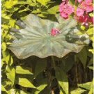 Lily Leaf Bird Bath II