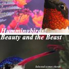 Hummingbirds! Beauty and the Beast