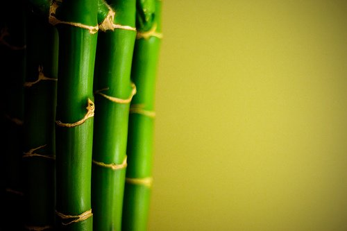 GOOD LUCK BAMBOO PLANT HOME GARDEN GARDENING INDOOR PLANTS