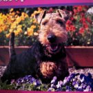 lot 3 set box parrot dog schnauzer garden flowers ENCORE PUZZLE 504 PIECE HOME decor art painting