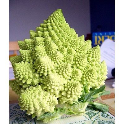 Romanesco Broccoli 50 Seeds Heirloom Best Taste Vegetable home garden plant
