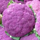 Cauliflower Seeds Sicilian Violet Heirloom 200+ seeds garden family home plant seed vegetable fruit