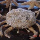 Nautical Decoration Crab Sea Crab