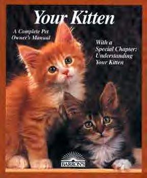 Your Kitten