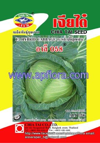 Apichaya Flora Vegetable seeds Cabbage-Ali 058