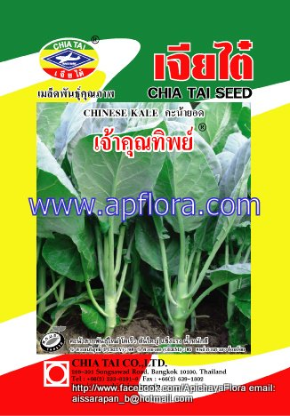 Apichaya Flora Vegetable seeds Chinese Kale-Chaokunthip