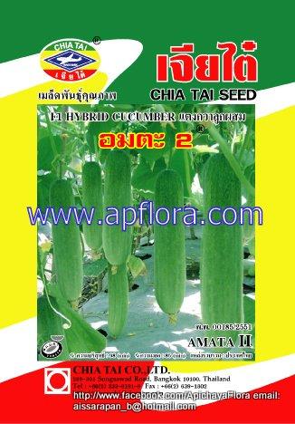 Apichaya Flora Vegetable seeds Cucumber-Amta II