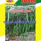 Apichaya Flora Vegetable seeds Pepper-Yok swan 10