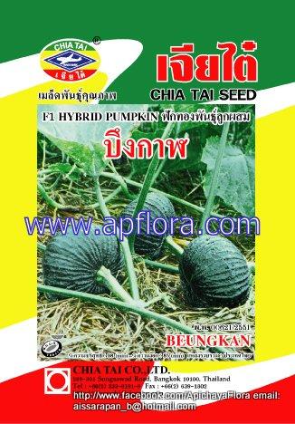 Apichaya Flora Vegetable seeds Pumpkin-Bungkarn