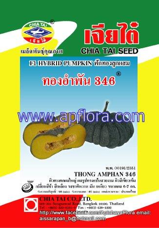 Apichaya Flora Vegetable seeds Pumpkin-Thong am pan346