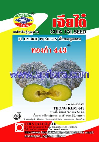 Apichaya Flora Vegetable seeds Pumpkin-Thongkam443