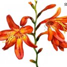 Orange Flowers Print Watercolor Floral Painting Realistic Summer Flowers Home Art Gift