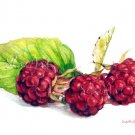 Fruit Art - Painting of Raspberries Still Life Food Print Watercolor Painting Home Decor
