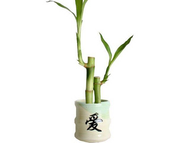 2 lucky bamboos with symbolic love pot.