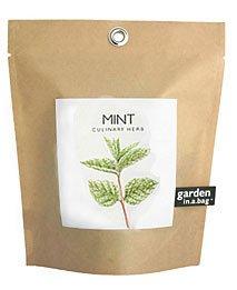 Mint Garden in a Bag