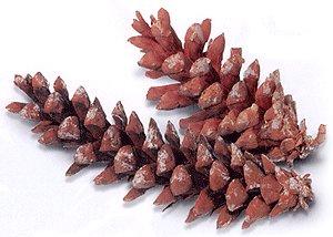Assorted Pine Cones (100)
