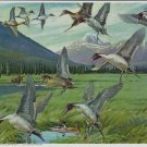 Vintage Print Pintails Whirling In Louis Darling Geese 8x10