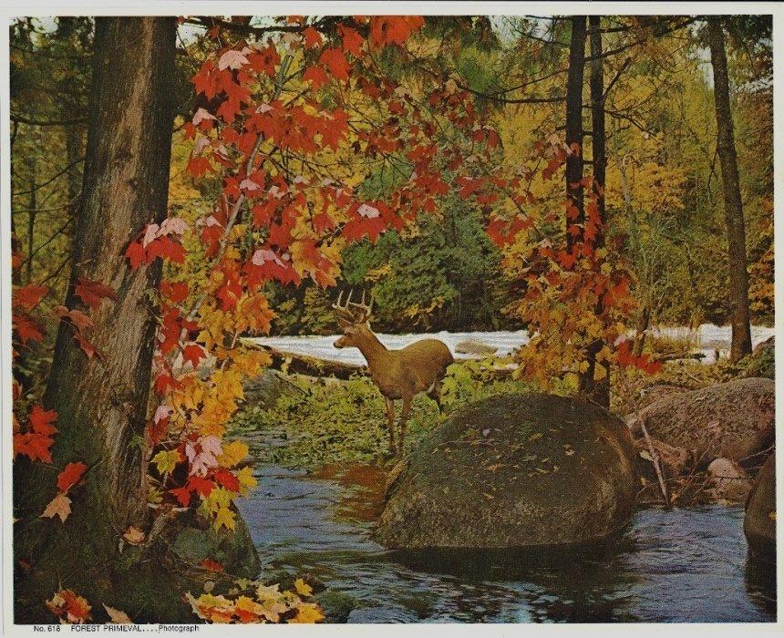 Vintage Print Forest Primeval Buck, Deer at Stream 8x10