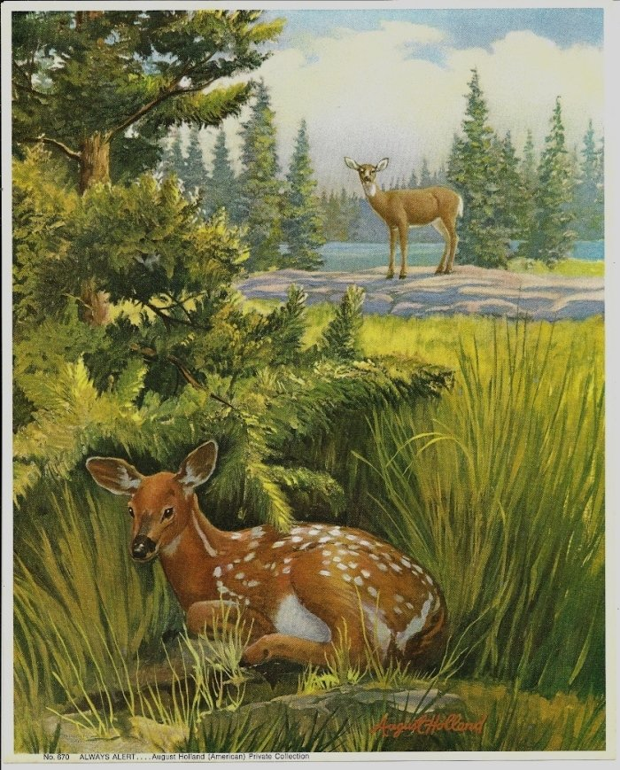 Vintage Fawn Print Always Alert August Holland 8x10
