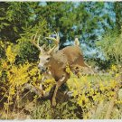 Vintage Buck, Deer Print 8x10 Comin Through