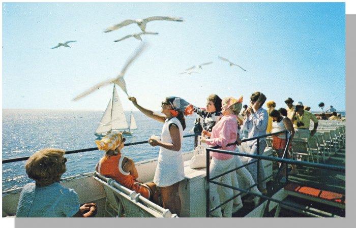 MARTHA'S VINEYARD MASS/MA POSTCARD, Cape Cod/Gulls