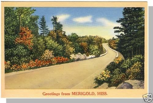 Beautiful MERIGOLD, MISSISSIPPI/MS POSTCARD, 1968!