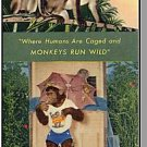 MIAMI/GOULDS, FLORIDA/FL BROCHURE,Monkey Jungle,1960's?