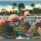 MIAMI, FLORIDA/FL POSTCARD, Hialeah Track/Flamingoes