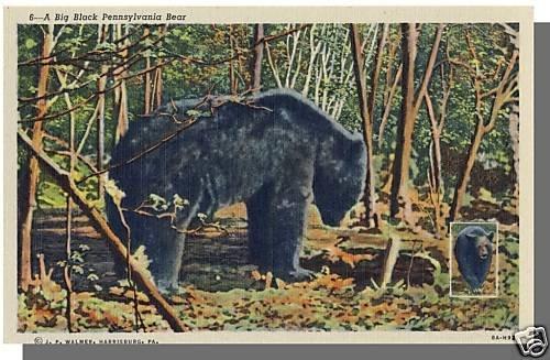 PENNSYLVANIA/PA POSTCARD, Big Black Pennsylvania Bear